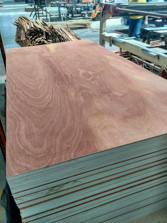 Sapele ,Pine ,Birch Plywood for May Shipments (Domestic and Foreign Markets)